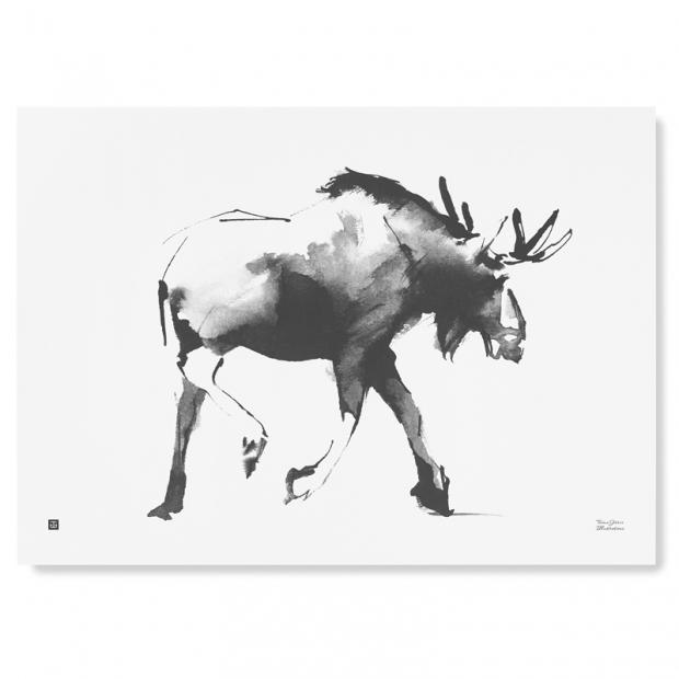 Plakát Elk 70x50