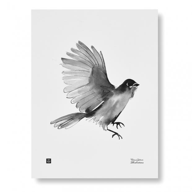 Plagát Siberian Jay 30x40