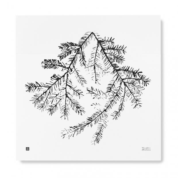 Plagát Spruce Branch 50x50