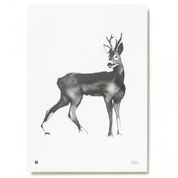 Plagát Roe Deer 50x70